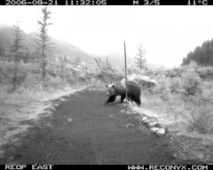 grizzly-camera-bw.jpg